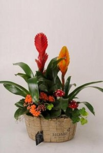 Plantas en cerámica