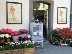 La tienda, Flori y las plantas